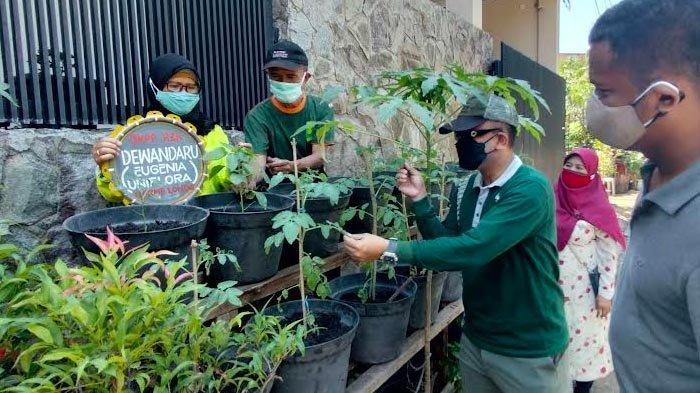 Wujud Ketahanan Pangan, Warga Simomulyo Baru Surabaya Lakukan Urban Farming di Masa Pandemi