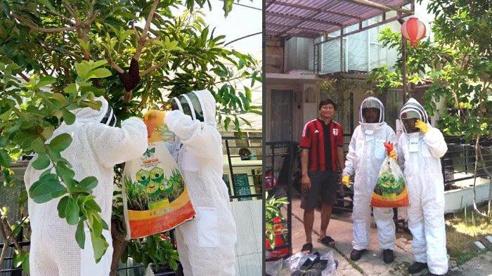 Tim Orong-orang PMK Surabaya: Disembur Tawon hinga Jadi Sasaran Kemarahan Kera Pernah Dialami