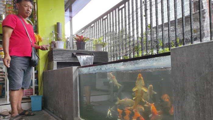 Kisah Eks Pegawai BUMN Kota Blitar Raup Jutaan Rupiah Sebulan dari Budidaya Ikan Koi di Lahan Sempit