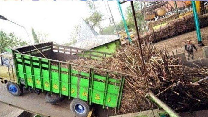 Bahan Baku Tebu Langka, Komisaris PTPN XI Menyebut Komitmen Pabrik Gula Baru di Jatim Tidak Berjalan