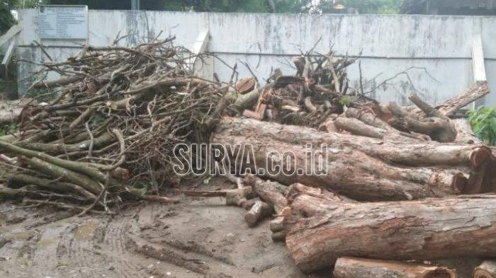 Ada Tanda Silang, Tiga Pohon Sonokeling di Sumbergempol Kabupaten Tulungagung Ini Diduga akan Dicuri