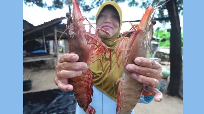 Pemkab Pasuruan Genjot Potensi Udang Vaname, Ekspor hingga 2024 Ditarget Meningkat 250 Persen