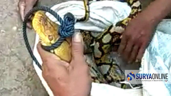 Warga Masih Resah, BBKSDA Siap Bantu Sewa Pawang untuk Buru Ular Piton di Gua Unengan Mojokerto
