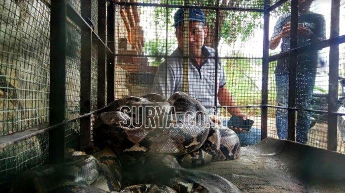 BBKSDA Ajak Warga Kampung Unengan Mojokerto Konservasi Habitat Ular Piton