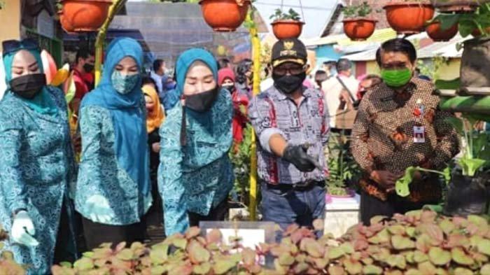 Urban Farming Wujudkan Malang Sehat, Sayuran dan Tanaman Herbal Solusi Imunitas saat Pandemi