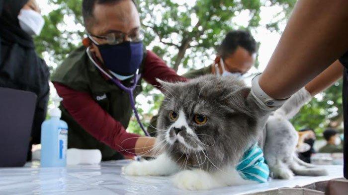 Vaksinasi Rabies Gratis untuk 2.300 Hewan Liar dan Peliharaan di Kabupaten Banyuwangi