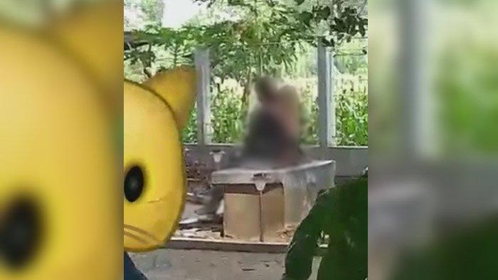 Video Sejoli Beradegan Dewasa di Taman Disbudparpora Ponorogo Jadi Viral, Perekam Mengaku Gemetar