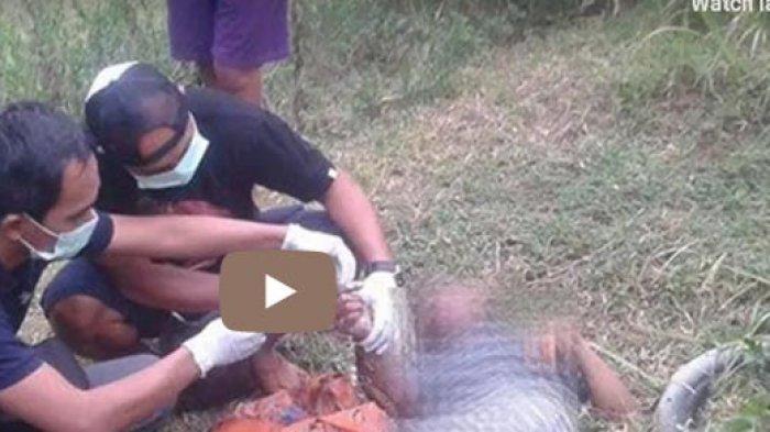 VIRAL Video Pria Tewas Bersama 2 Belut Putih Besar di Sampingnya, Ini Kronologi dan Kata Polisi Bali