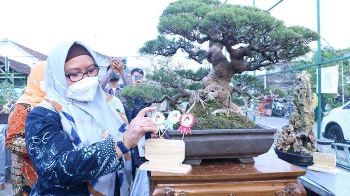 Sejarah Kampung 'Bonsai' Gresik Berawal dari Hobi Jadi Kontes