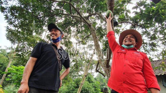 Wakil Ketua DPRD Dorong OPD Promosikan Potensi Alpukat Pisang Kabupaten Pasuruan