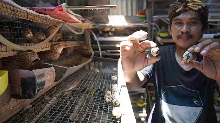 Wujud Ketahanan Pangan dan Ekonomi, Warga Medokan Ayu Surabaya Ternak Burung Puyuh dalam Rumah