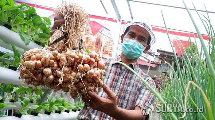 Warga RW 4 Perumahan ITS Surabaya Tanam Bawang Merah Organik, Gunakan Sistem Akuaponik