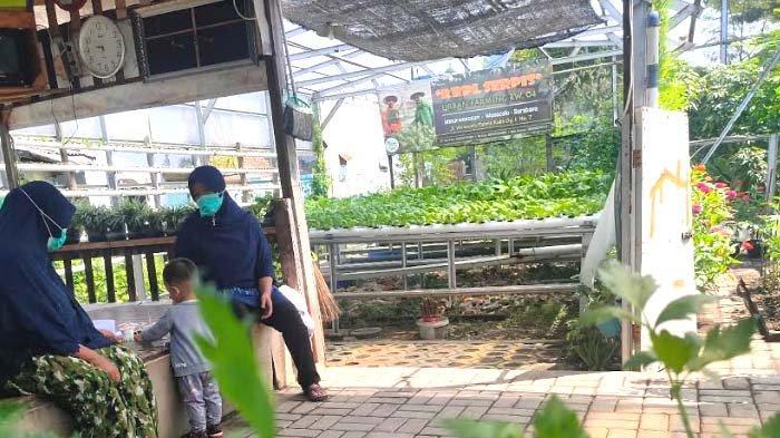 Tak Mudik, Warga RW 4 Jemur Wonosari Surabaya Sibukkan Diri di Kebun Serpis