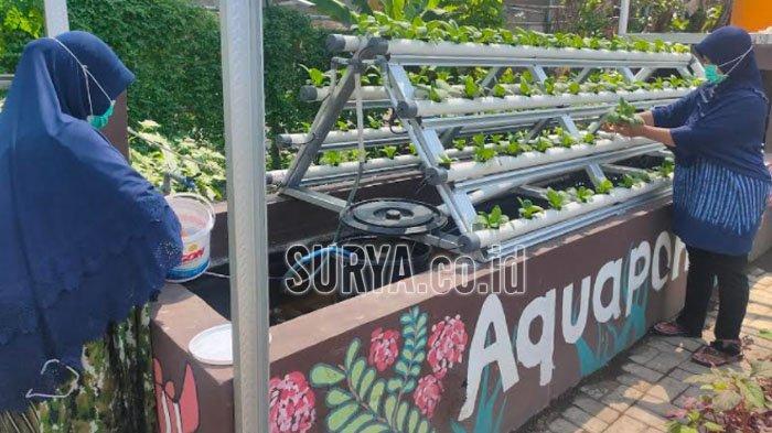 Sambang Kampung RW 4 Kelurahan Jemur Wonosari Kota Surabaya, Mulai Kembangkan Aquaponik