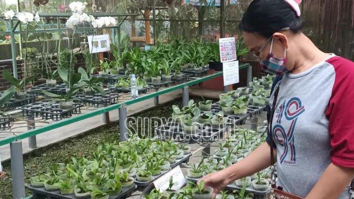 Wisata Kampung Anggrek di Lereng Gunung Kelud Kabupaten Kediri yang kembali dibuka.