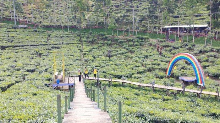 Menyelami Segarnya 'Lautan' Kebun Teh Gunung Gambir Jember, Wisata Alam Sehat Pelepas Kepenatan - wisata-kebun-teh-gunung-gambir-jember.jpg