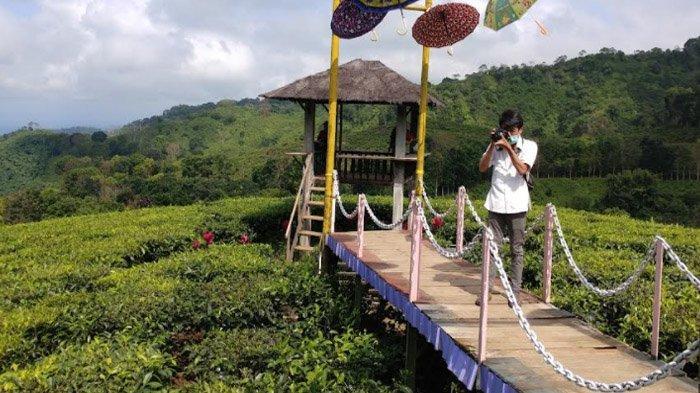 Menyelami Segarnya 'Lautan' Kebun Teh Gunung Gambir Jember, Wisata Alam Sehat Pelepas Kepenatan - wisata-kebun-teh-gunung-gambir-jember2.jpg