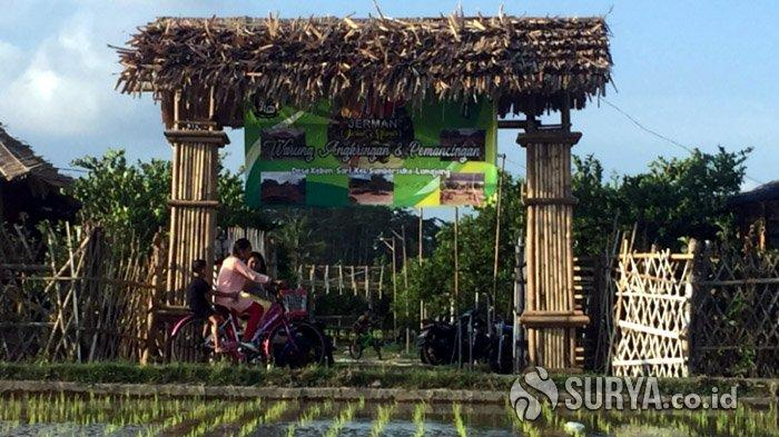 Bikin Wisata Petik Jeruk, Ini Cara Petani Lumajang Jaga Stabilitas Harga yang Semakin Turun