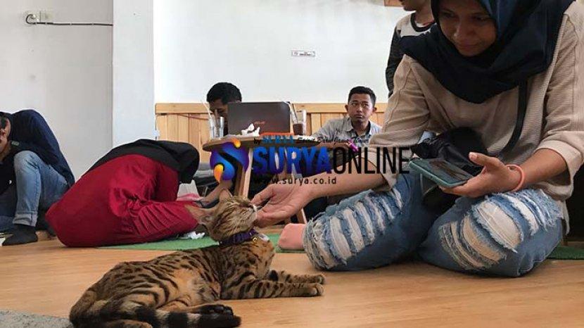kucing-neko-kepo-cat-and-cafe-surabaya.jpg