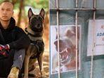 5-fakta-keganasan-anjing-bima-aryo-lukai-lansia-serang-art-sampai-tewas-ini-respon-pemilik.jpg