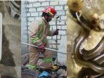 5-fakta-teror-ular-kobra-di-bojonegoro-warga-sudah-musnahkan-25-ekor-masih-temukan-lagi-3-ekor.jpg