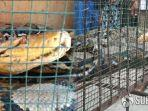5-kasus-kemunculan-ular-yang-menghebohkan-sepanjang-tahun-2019-salah-satunya-telan-tubuh-anjing.jpg