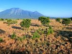 baluran-national-park_20180122_151615.jpg