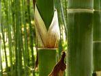 bambu_20180303_190634.jpg