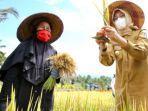 banyuwangi-menggelar-festival-padi-di-desa-banjar-kecamatan-licin-kabupaten-banyuwangi.jpg
