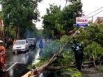 belasan-pohon-tumbang-di-kota-kediri-karena-angin-kencang.jpg