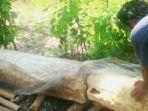 berita-jogja-yogyakarta-menhir-gunungkidul_20161122_012822.jpg