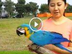 berita-kediri-burung-mahal_20170116_132433.jpg