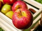 berita-lifestyle-apel-buah_20160823_112231.jpg