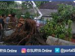 berita-pasuruan-pohon-di-kota-pasuruan-tumbang_20170103_174614.jpg
