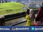 berita-surabaya-jatim-pengunjung-kbs_20160508_200324.jpg