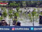 berita-surabaya-marinir-tanam-bibit-mangrove_20161102_162322.jpg