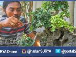 berita-tuban-sosok-weni-penggemar-bonsai_20160409_231213.jpg