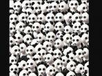 bisakah-anda-menemukan-anjing-di-antara-kumpulan-panda-ini_20160130_125749.jpg
