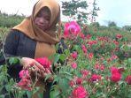 budidata-bunga-mawar-di-magetan.jpg