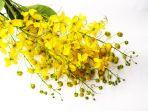 bunga-kuning_20180803_192755.jpg