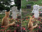 cerita-mengharukan-kucing-tunggui-kuburan-majikannya-foto-fotonya-viral-di-facebook.jpg