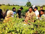 direktur-jenderal-hortikultura-prihasto-setyanto-tanaman-cabai-di-sleman.jpg