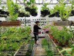 greenhouse-de-orchiganic-di-kelurahan-dadaprejo-jadi-wisata-edukasi-di-kota-batu.jpg