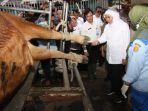 gubernur-khofifah-melihat-koleksi-sapi-pejantan-yang-dimiliki-oleh-bbib-singosari.jpg
