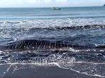 hiu-paus-yang-mati-di-pantai-gemah-tulungagung-dua.jpg