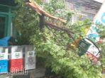 hujan-deras-30-menit-sebabkan-pohon-tumbang-di-magetan_20171113_224055.jpg