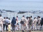 ikan-paus-terdampar_20171114_102619.jpg