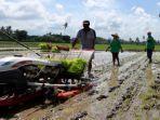 ilustrasi-pertanian-di-banyuwangi.jpg