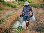 ilustrasi-petani-ilustrasi-kekeringan-dry-soil_20181017_120310.jpg