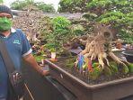 jaka-surya-salah-satu-panitia-pameran-bonsai-lumajang.jpg
